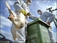 Avian Flu Quarantine