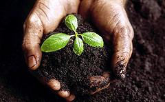 Японцы создали искусственную почву